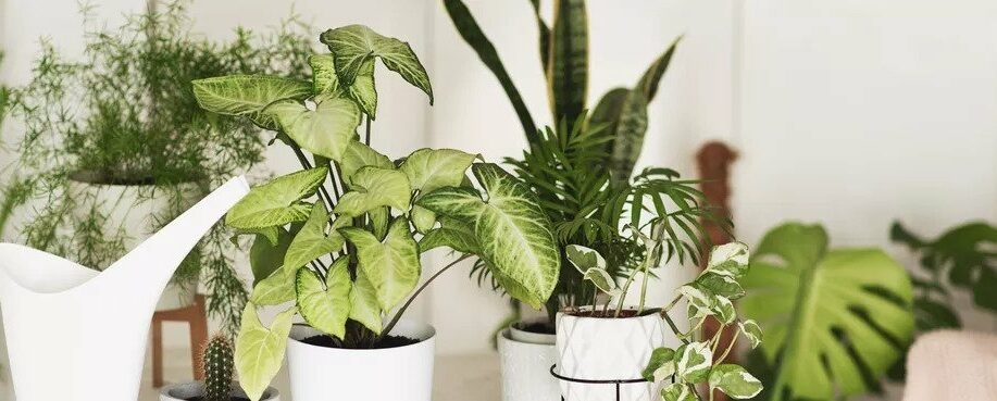 5 Rare Plants That Houseplants Collectors Will Drop Serious Cash For Plantx Investor